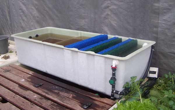 Solids filter for domestic aquaponics systems practical for Aquaponics filter